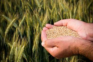 agri-environnement-semences-fermieres-presentation