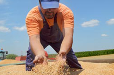 graines-semences-agri-environnement