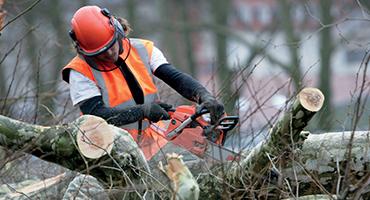 Debrousaillage-abattage-arbres-agri-environnement