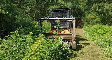 Debrousaillage-abattage-arbres-2-agri-environnement